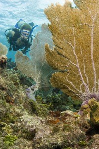 Florida Keys Diving