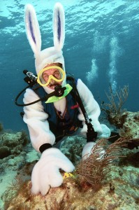 Spencer Slate, owner of the Atlantis Dive Shop in Key Largo, Fla., positions a colored, hard-boiled egg on a dormant rock in the Florida Keys National Marine Sanctuary Saturday, April 10, 2004. Slate donned a rabbit costume and positioned the eggs for an underwater Easter egg hunt for 16 of his customers. (AP Photo/Florida Keys News Bureau, Bob Care)